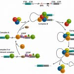 Targeting Splicing in the Treatment of Human Disease.